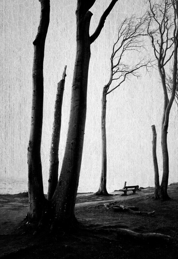 Ghost Forest - Fineart photography by Alex Wesche
