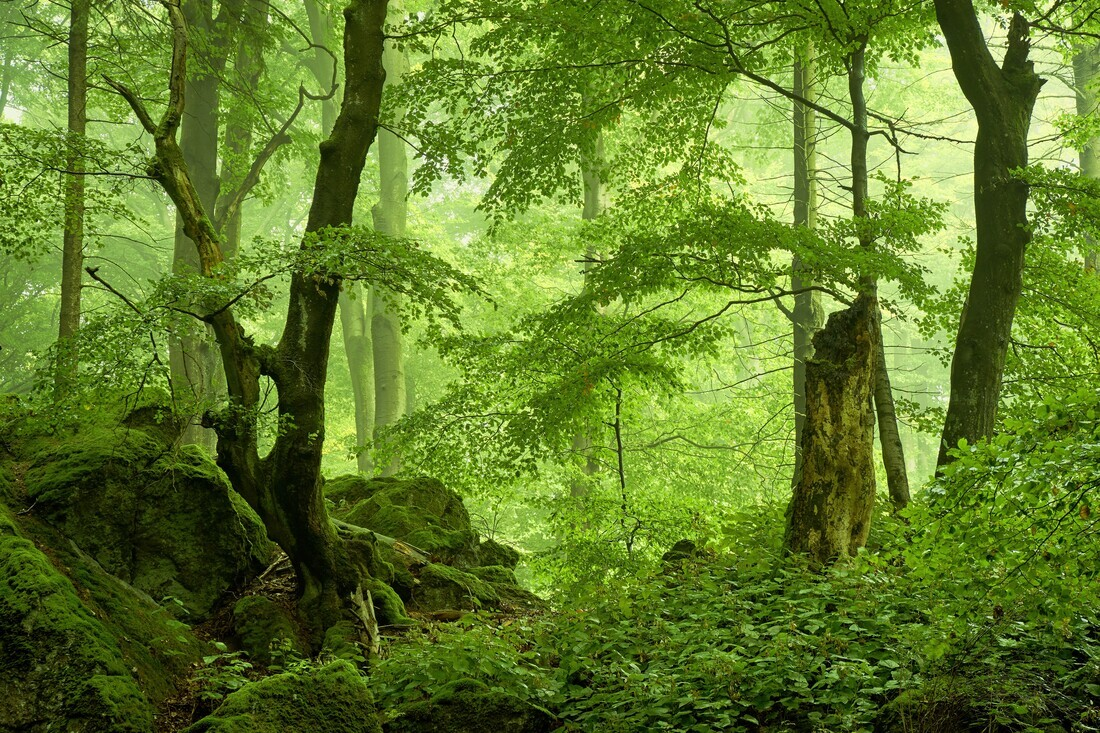 Primeval Forest - Fineart photography by Alex Wesche