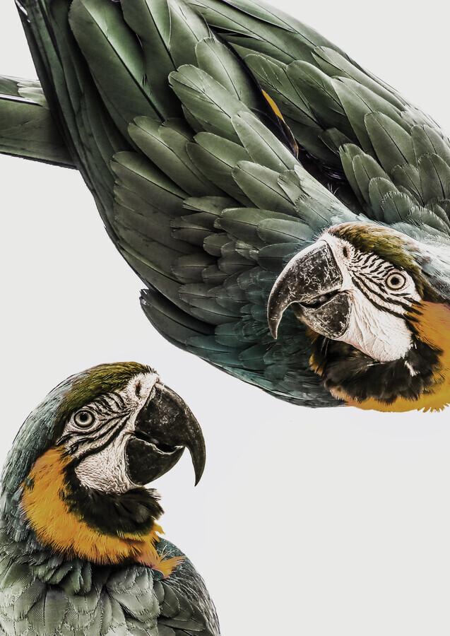Amazonia - fotokunst von Shot By Clint
