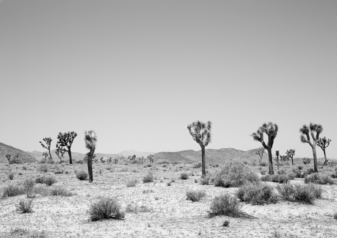 Into the West - Fineart photography by Shot By Clint