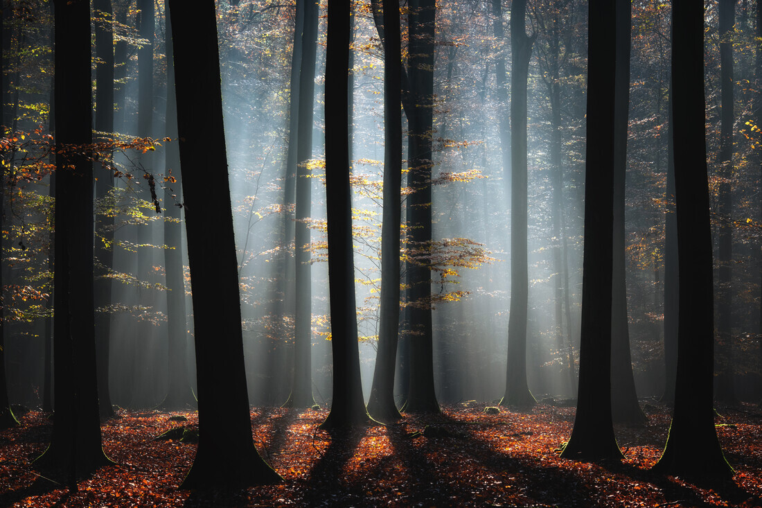 Autumn In The Woods - Fineart photography by Carsten Meyerdierks