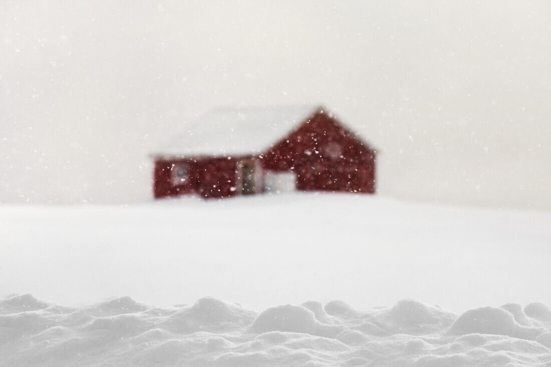 Behind the snow - Fineart photography by Victoria Knobloch