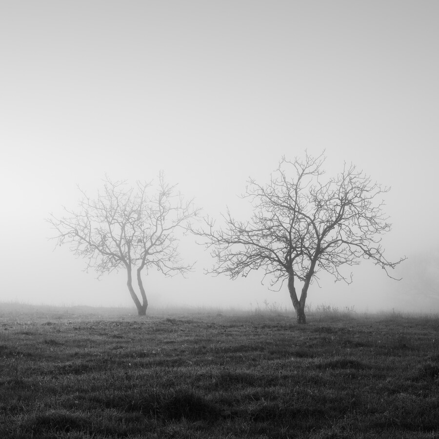 Dancing trees - Fineart photography by Thomas Wegner