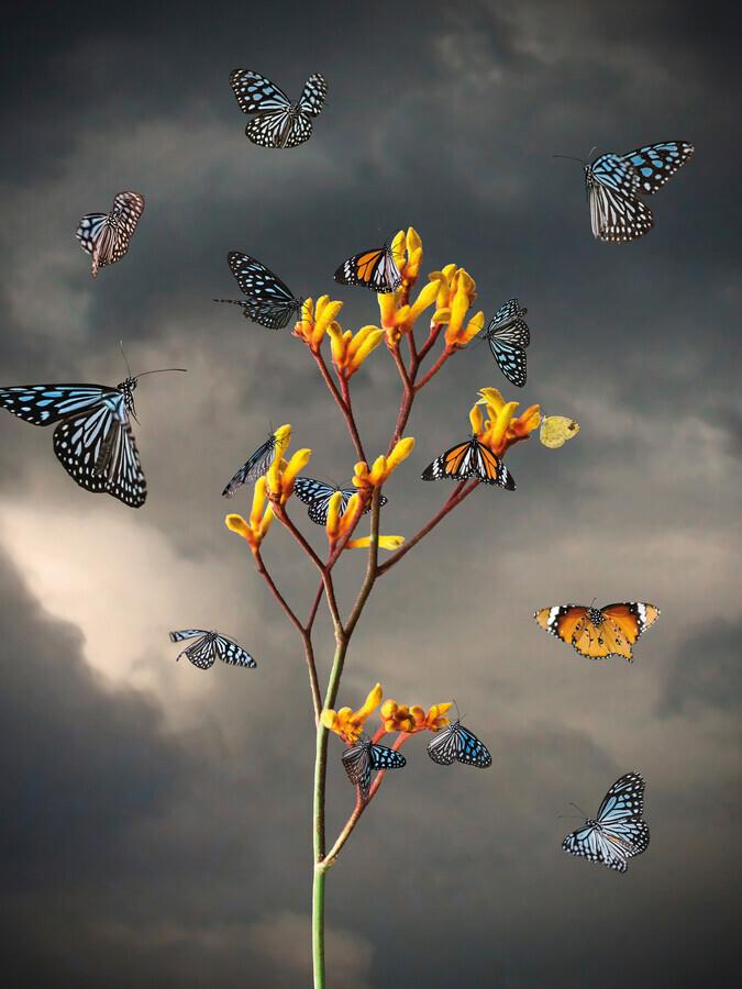 Before the Storm - fotokunst von Jesper Krijgsman