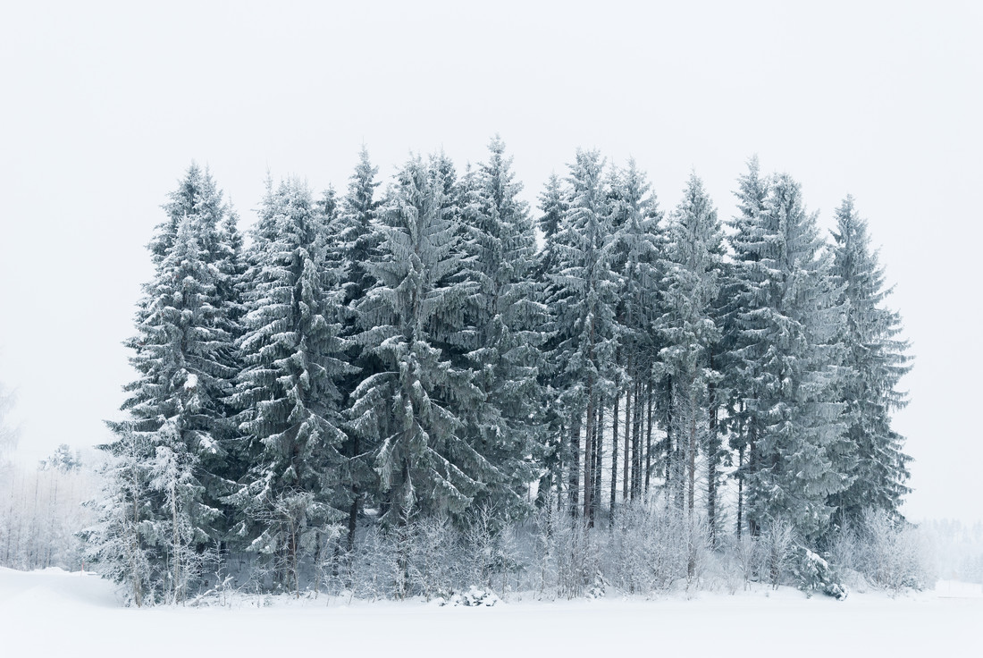 A small Snowy Forest - Fineart photography by Pekka Liukkonen