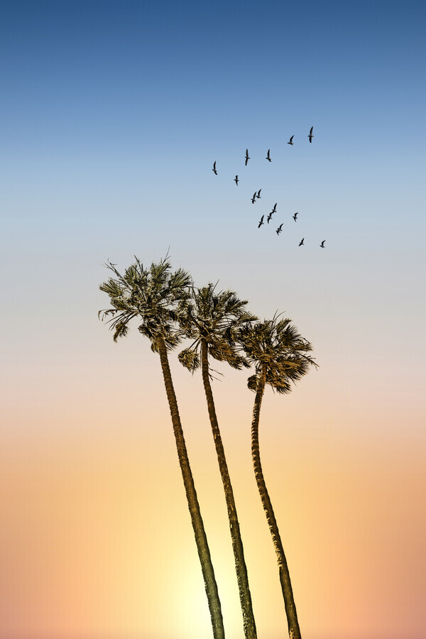 Palm trees and sunset - Fineart photography by Melanie Viola
