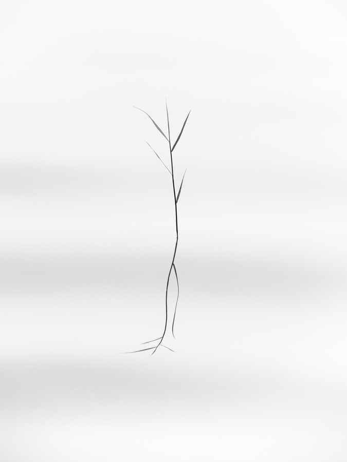dancing reed - Fineart photography by Holger Nimtz