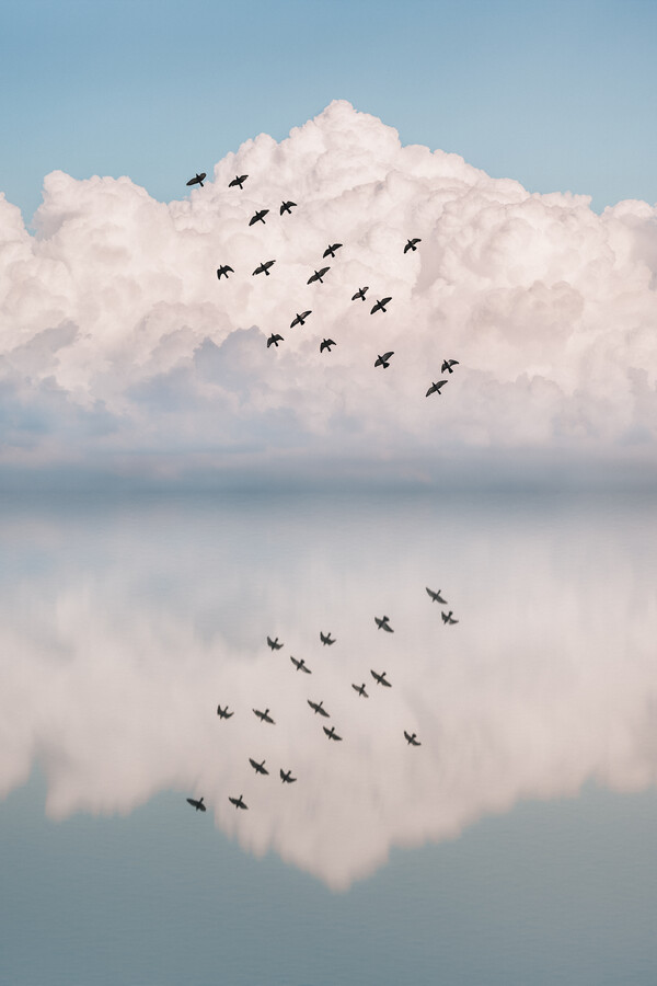 Reflection Flock - fotokunst von AJ Schokora