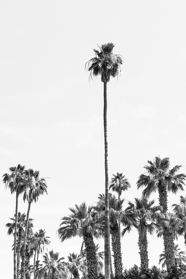 Palm Trees at the beach - Fineart photography by Melanie Viola