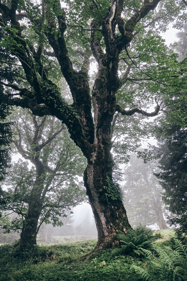 Foggy Trees full of character - Fineart photography by Alex Wesche