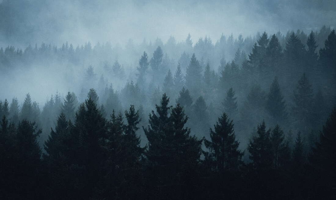 Dark Spruces - Fineart photography by Maximilian Fischer