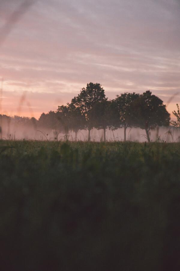 Baum-Allee - Fineart photography by Robert Hagstotz