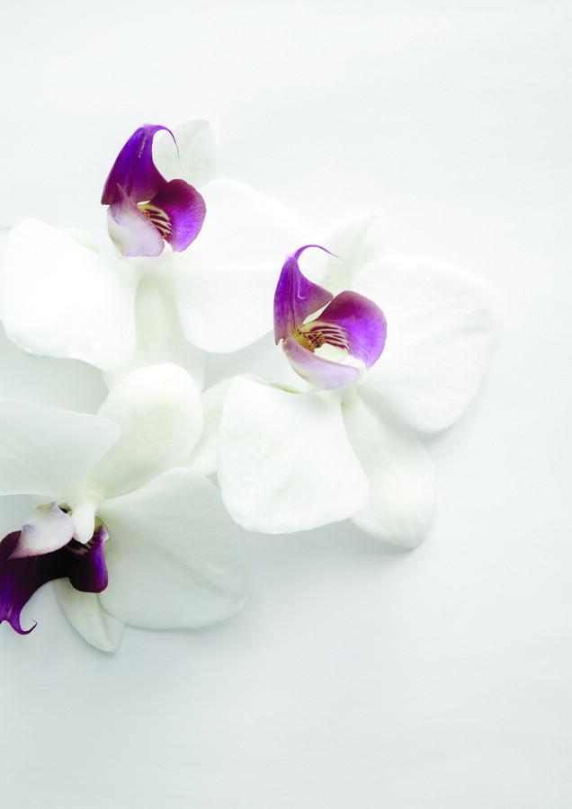 White Wild Orchid - fotokunst von Studio Na.hili