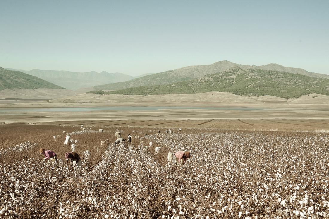 cotton harvest in Hatay - Fineart photography by Saskia Gaulke