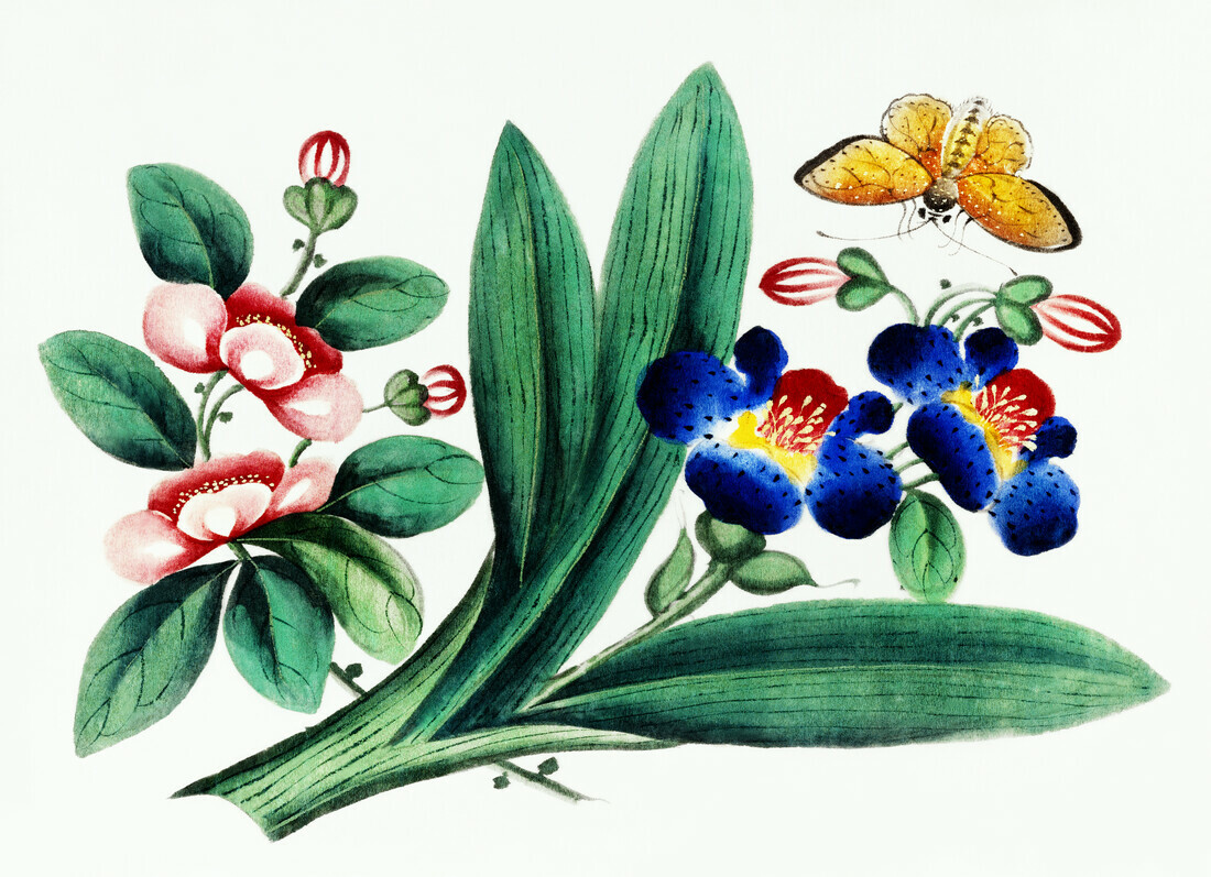 Chinese painting featuring flowers and a butterfly - Fineart photography by Vintage Nature Graphics