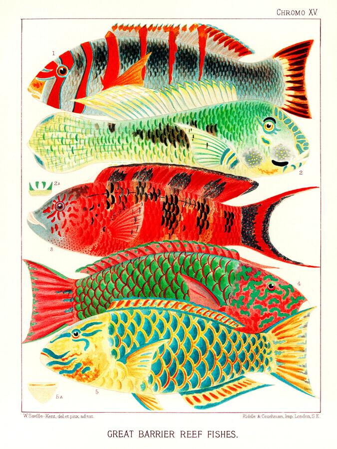 Fische aus dem Great Barrier Reef von William Saville-Kent - fotokunst von Vintage Nature Graphics