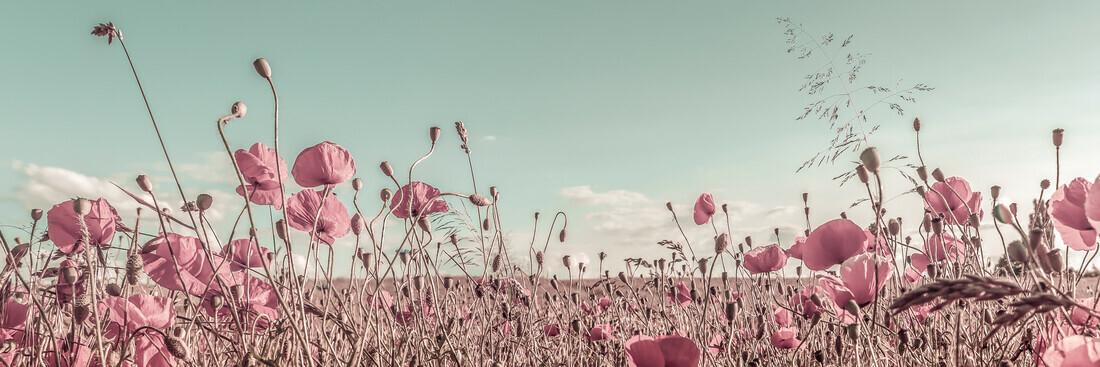 Vintage Mohnblumenfeld - fotokunst von Melanie Viola