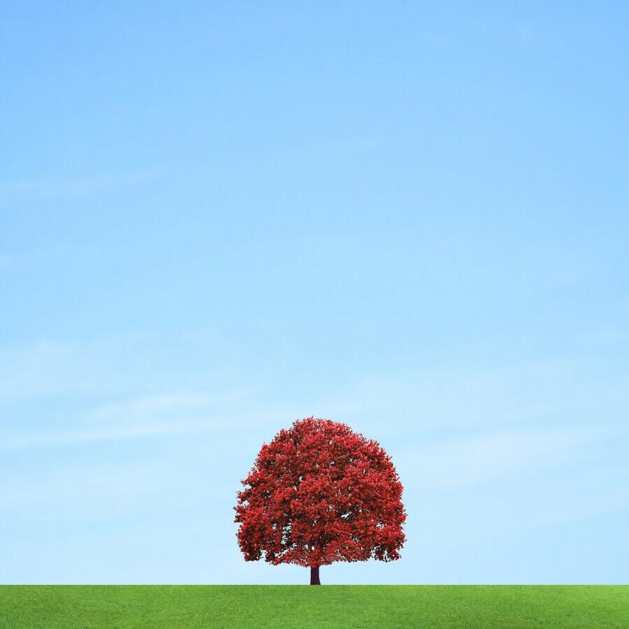 Lonely boy - fotokunst von Pascal Krumm