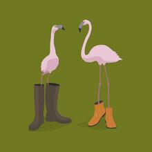 Florent Bodart, Fashion Flamingos (Deutschland, Europa)