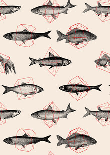 Florent Bodart, Fish in Geometrics II (Deutschland, Europa)