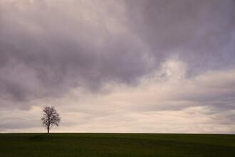 Lena Weisbek, Einsamer Baum (Deutschland, Europa)
