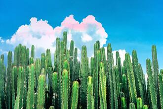 Uma Gokhale, Cactus Summer (India, Asia)