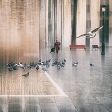 Roswitha Schleicher-Schwarz, the pigeon mother (Italy, Europe)