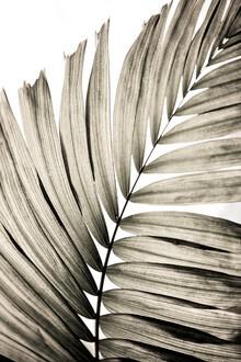 Mareike Böhmer, Palm Leaves 21 (Germany, Europe)