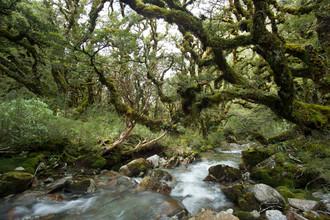 Stefan Blawath, Im Ur-Wald von Neuseeland (Neuseeland, Australien und Ozeanien)