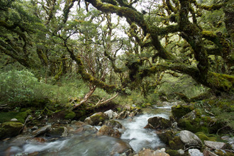 Stefan Blawath, Im Ur-Wald von Neuseeland (New Zealand, Oceania)