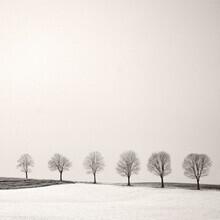 Lena Weisbek, Tree Line (Deutschland, Europa)