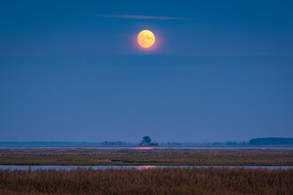 Martin Wasilewski, 1000 Cranes under the Full Moon (Germany, Europe)