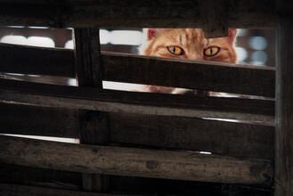 AJ Schokora, Cat Eyes (China, Asia)