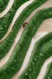 AJ Schokora, Horse (China, Asien)