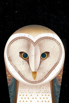 Dieter Braun, Barn Owl (Germany, Europe)