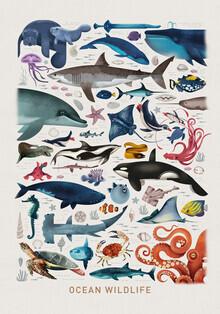 Dieter Braun, Ocean Wildlife (Germany, Europe)