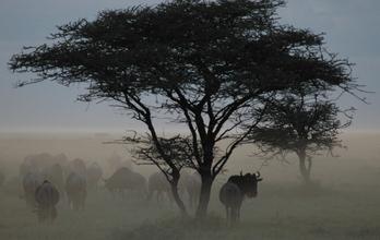 Dämmerung in der Serengeti - fotokunst von Renate Horak