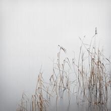 Lena Weisbek, Grey January (Deutschland, Europa)