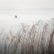 Lena Weisbek, Fliegender Vogel am See (Deutschland, Europa)
