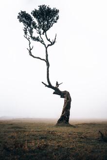 Sergej Antoni, Lonely Tree (Portugal, Europe)