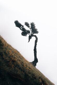 Sergej Antoni, Lonely Tree 2/3 (Portugal, Europe)