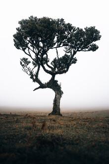 Sergej Antoni, Lonely Tree 3/3 (Portugal, Europe)