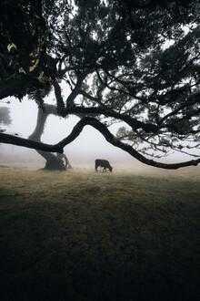 Sergej Antoni, Stranger Cow (Portugal, Europe)