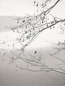 Lena Weisbek, On The Frozen Pond (Deutschland, Europa)