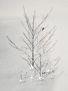 Lena Weisbek, Lonely Bird (Deutschland, Europa)