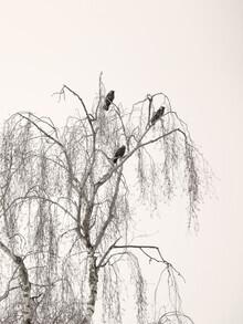 Lena Weisbek, Bird Trio (Deutschland, Europa)