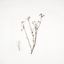 Lena Weisbek, Small Twigs In Snow (Deutschland, Europa)