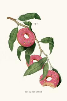 Jonas Loose, Donut Plant (Deutschland, Europa)