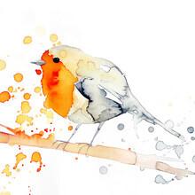 Marta Casals Juanola, Robin bird (Spain, Europe)