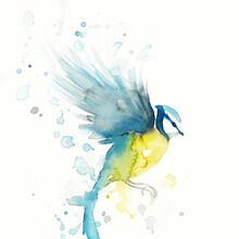 Marta Casals Juanola, Blue bird (Spain, Europe)